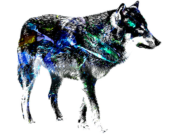 Wolf Outline Effect2 / 狼 - ヒスイ