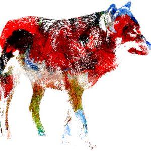 Wolf Outline Effect1 / 狼 - ペインティング
