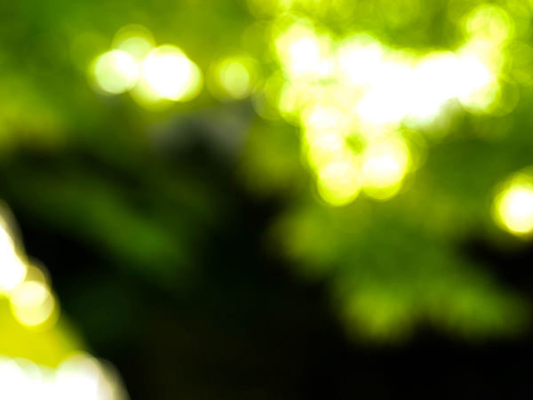 PhotoshopCC-Product-Base-Forest-Gaussian-Blur-Effect1-Thumbnails
