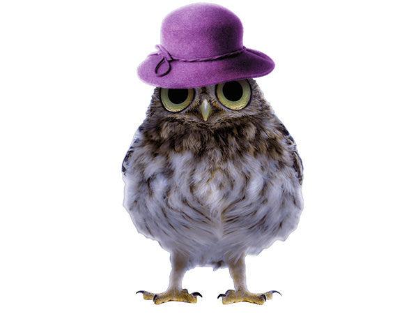 PhotoshopCC-Product-Charactor-Gentleman-Owl-Type5-Thumbnails