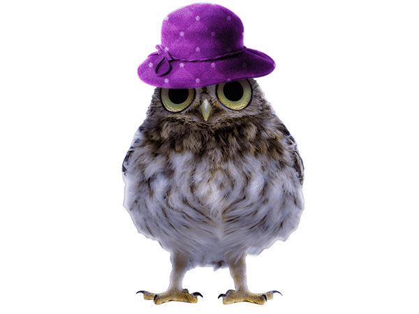 PhotoshopCC-Product-Charactor-Gentleman-Owl-Type6-Thumbnails