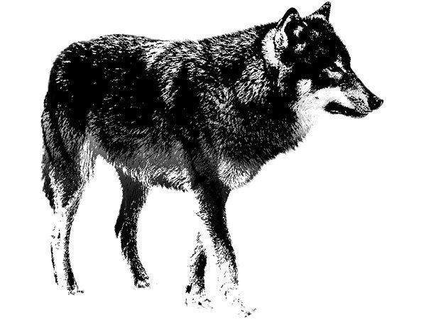 PhotoshopCC-Product-Charactor-Wolf-Basic-Thumbnails