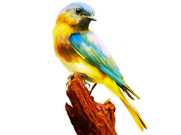 Colorful Birds Painting 1 / カラフル バード1(ペイント風)