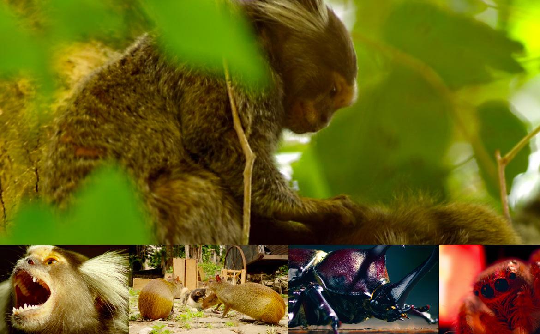 第三話「コンクリート・ジャングル」