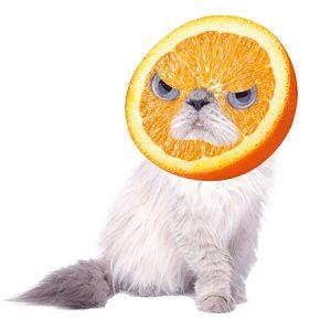 Orange Cat(Angry) / オレンジキャット(怒り)