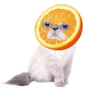 Orange Cat(Normal) / オレンジキャット(ノーマル)