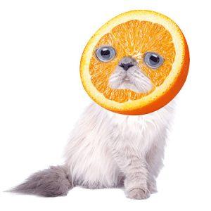 Orange Cat(Sadness) / オレンジキャット(悲しみ)