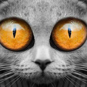 Big Eyes Cat (Orange) / ビックアイズキャット(オレンジ)
