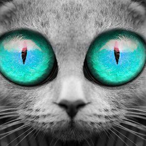 Big Eyes Cat (Sky Blue) / ビックアイズキャット(スカイブルー)
