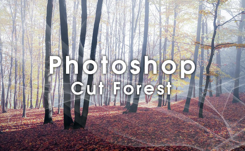 Photoshopで森林や樹木を簡単に上手く切り取るテクニック