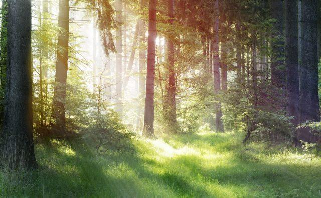 木漏れ日や降り注ぐ光を簡単の表現 アフター