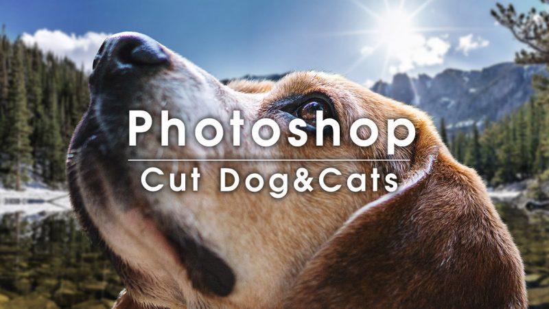 Photoshopで犬や猫などの動物の体や顔を綺麗に切り抜くテクニック