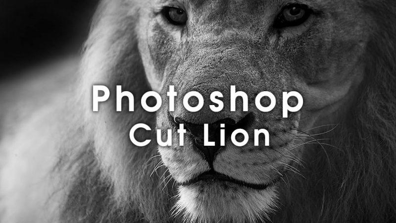 Photoshopで動物の体や顔を綺麗に切り抜くテクニック【ライオン編】