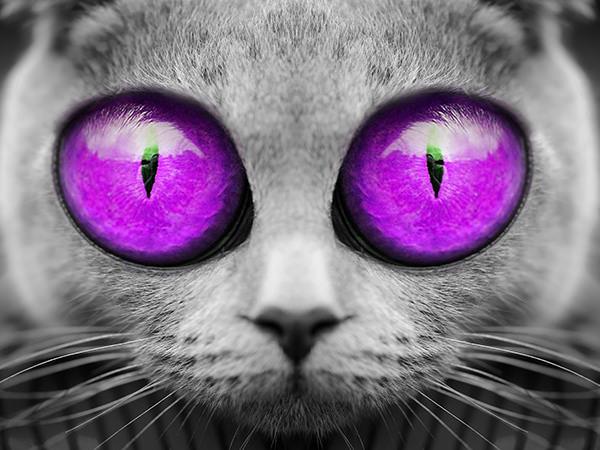 Big Eyes Cat (Purple) / ビックアイズキャット(パープル)
