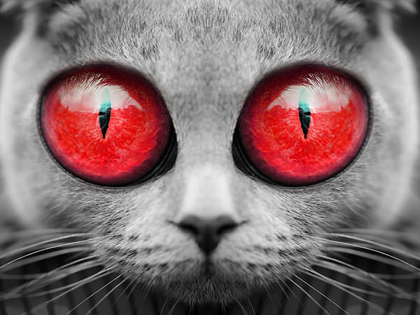 Big Eyes Cat (Red) / ビックアイズキャット(レッド)