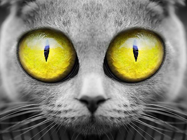 Big Eyes Cat (Yellow) / ビックアイズキャット(イエロー)