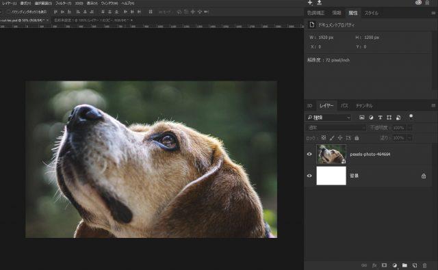 犬の画像を配置する